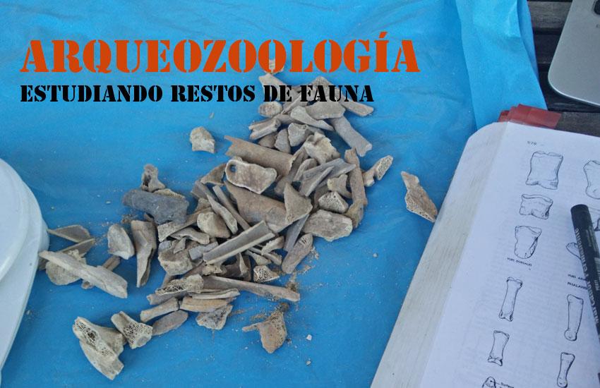 https://lurearqueologia.es/lu2021/wp-content/uploads/2015/09/arqueozoologia-1.jpg