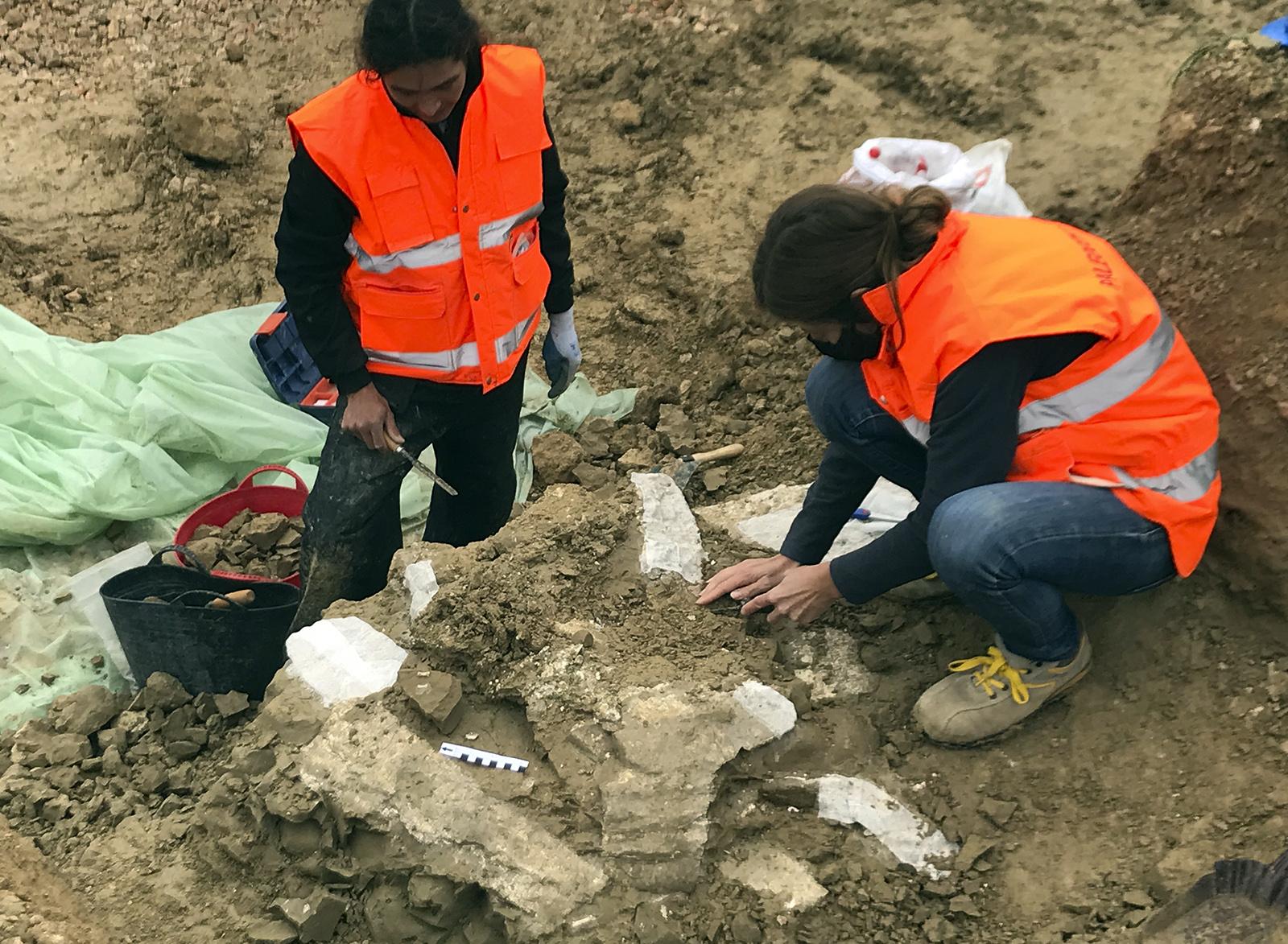 Paleontología con Lure Arqueología S.L.